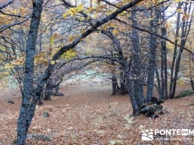 El Castañar de El Tiemblo, trekking en Castilla la Mancha; pozas de la pedriza